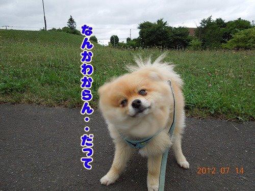 20120714002.jpg