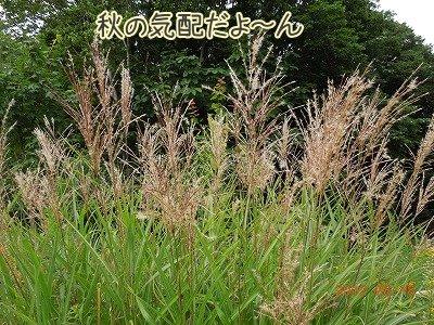 2012081905.jpg