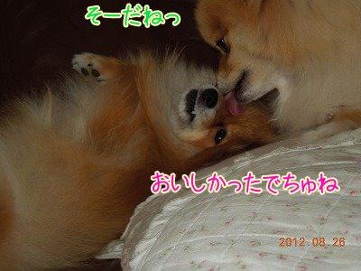 2012082605.jpg