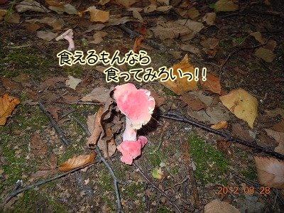 2012082804.jpg
