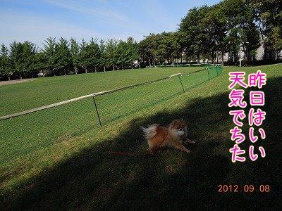 2012090901.jpg