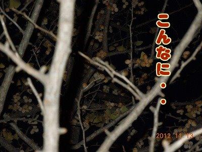 2012111503.jpg