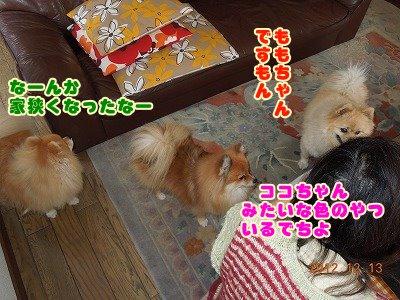 2012121305.jpg