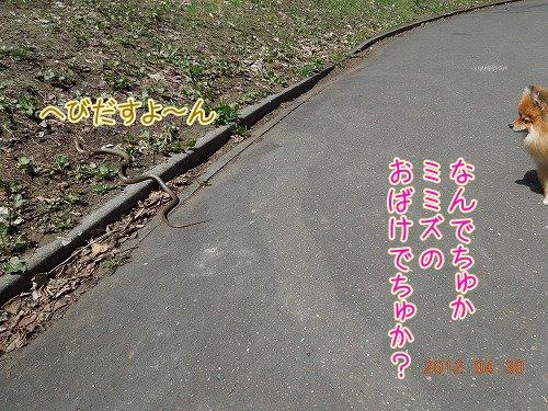 DSCN7851.jpg