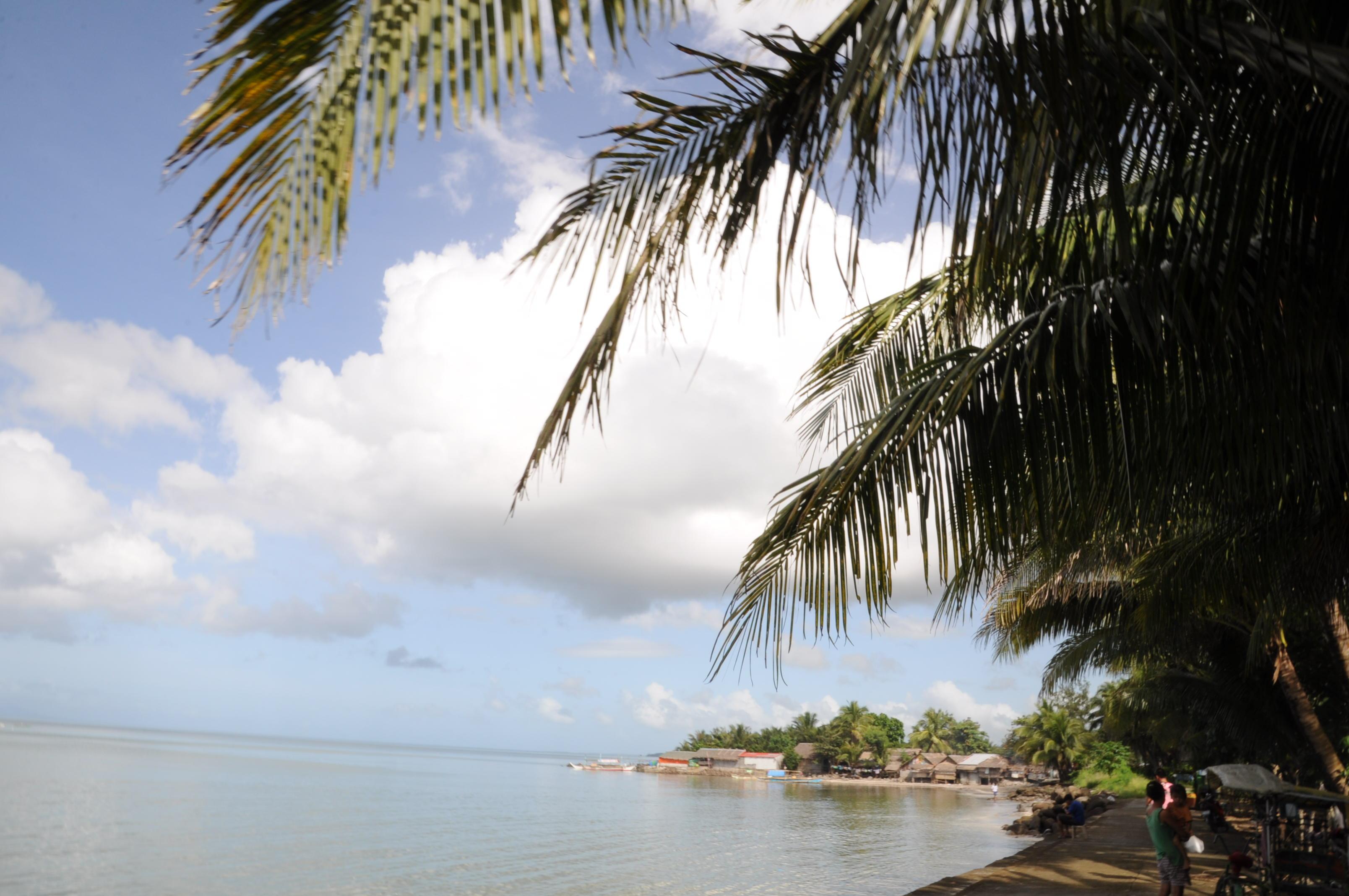 ココナッツと海