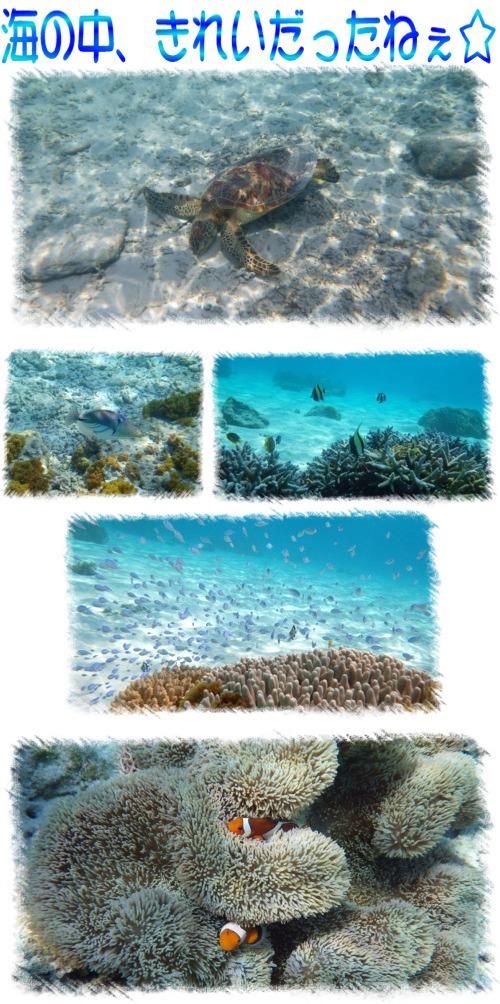 海の中、きれいだね