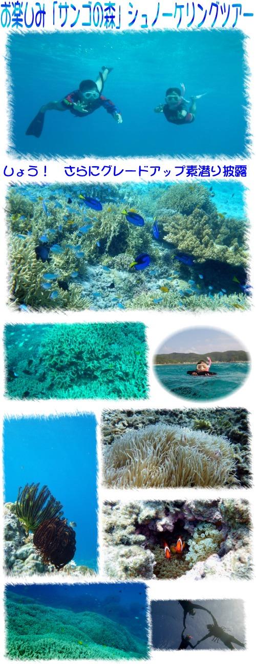 お楽しみ「サンゴの森」