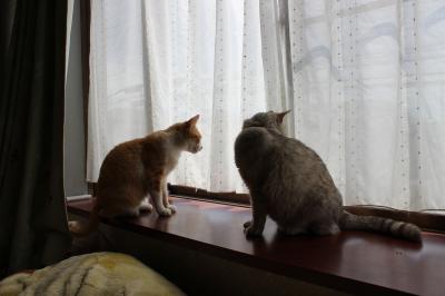 シーナとチャコ 3