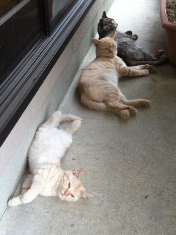 さっちゃんと子猫 2
