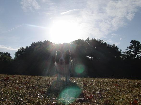 20121110-11.jpg