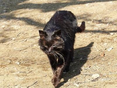 猫②140107昭和記念公園 (2)S済