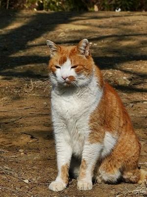 猫②140107昭和記念公園 (6)S済