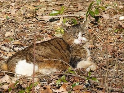 猫②140107昭和記念公園 (145)S済