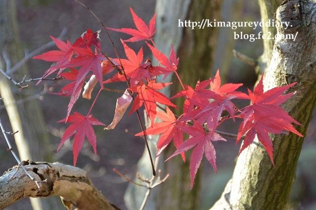 多可町北播磨余暇村公園 2014・11月27日