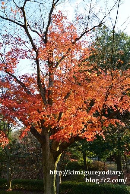 多可町北播磨余暇村公園 2014・11月27日 (3)