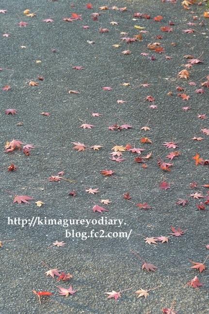 多可町北播磨余暇村公園 2014・11月27日 (2)