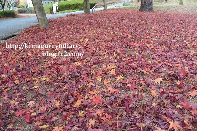 多可町北播磨余暇村公園 2014・11月27日 (5)