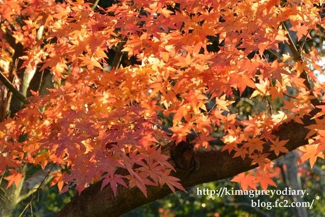 多可町北播磨余暇村公園 2014・11月27日 (4)