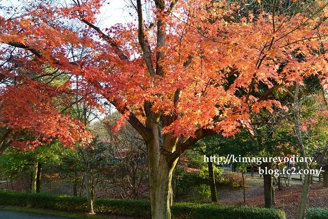 多可町北播磨余暇村公園 2014・11月27日 (7)