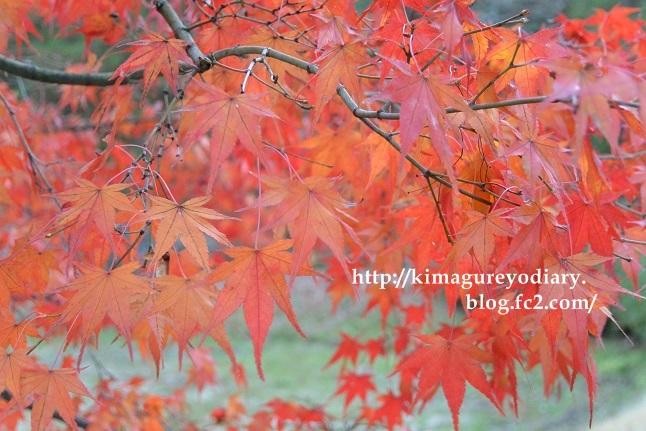多可町北播磨余暇村公園 2014・11月27日 (8)