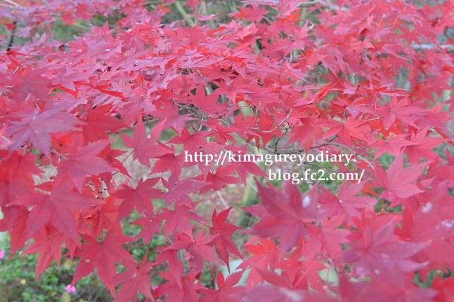 多可町北播磨余暇村公園 2014・11月27日 (9)