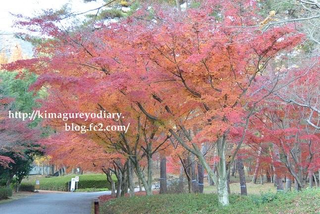 多可町北播磨余暇村公園 2014・11月27日 (10)