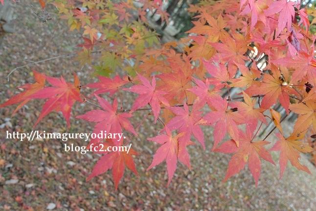 多可町北播磨余暇村公園 2014・11月27日 (11)