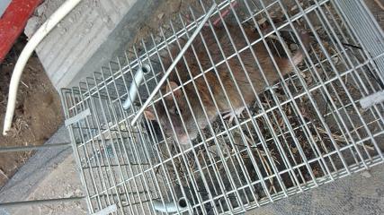 ネズミーマウス