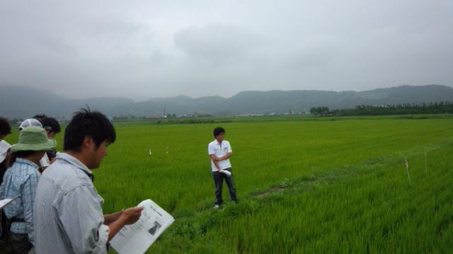 新品種の米