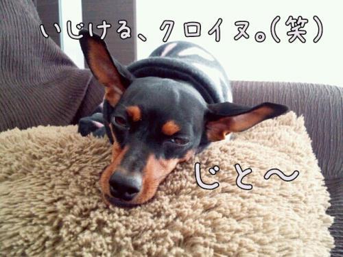 201312111359_convert_20130121154840.jpg
