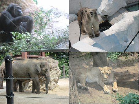 上野動物園 ゴリラ ゾウ ホッキョクグマ トラ