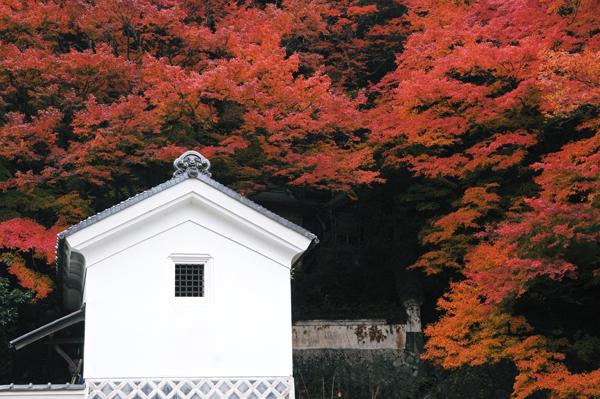 【散り行く紅葉】2