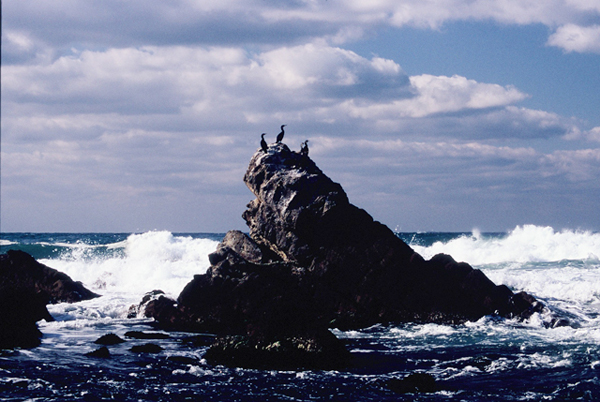 【日本海の荒波】3