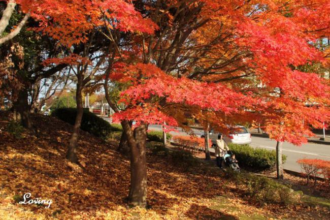 小春日和の公園