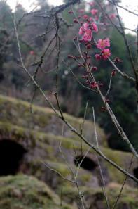 清水谷精錬所跡の梅