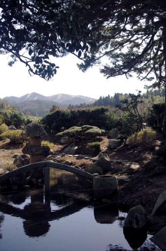 北庭の池とアレ