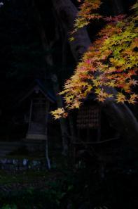 北島家の黄色い紅葉
