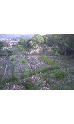 上からみた畑~♪