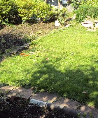 芝を刈る前の庭