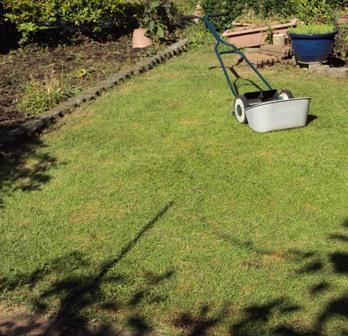 芝を刈った後の庭