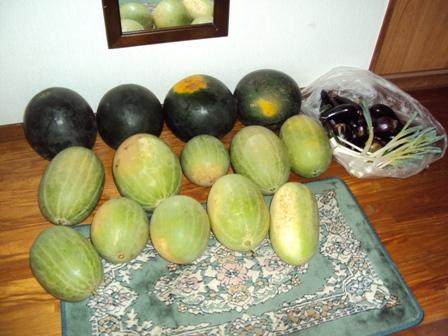 大量に収穫されたスイカとナス
