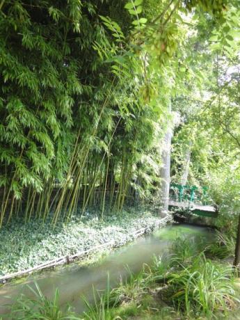 小川と竹林!