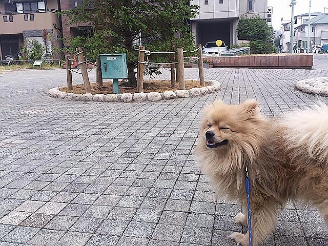 最近の朝の散歩。。