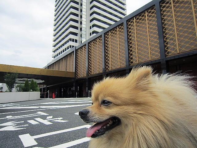 まーる散髪@『フェリーチェ』ホテルオークラ神戸(^u^)