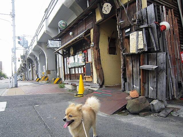 最近のマール散歩通信(^^)v