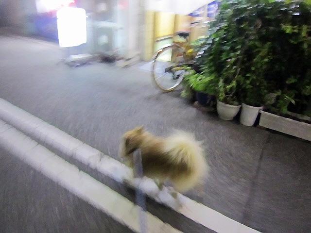 先週前半のあれこれ(歩く会・買い物などなど)(*^_^*)