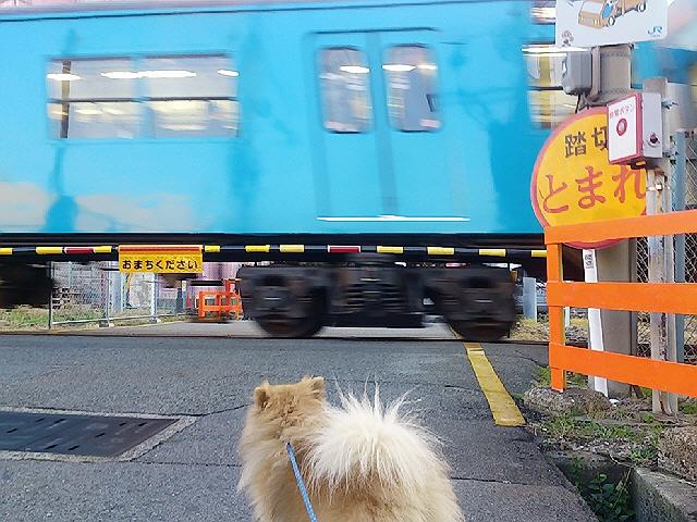 今日の和田岬線の踏切待ち♪&メリパナイトラン(^^)v