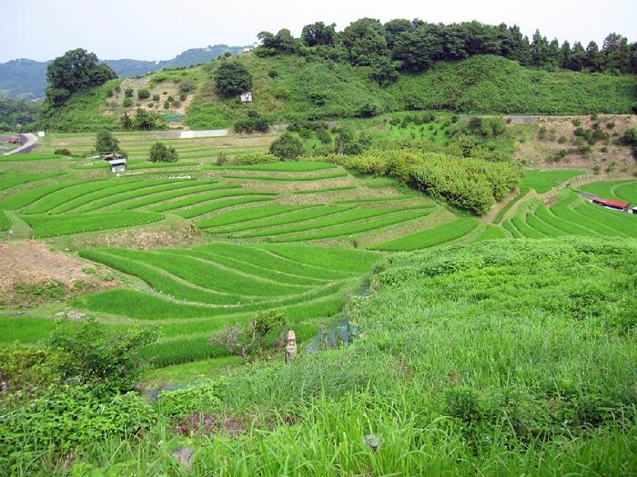 2013.7.14 棚田で草刈しました(^^♪