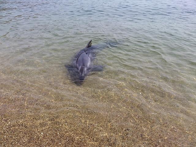 スマのイルカさんかわいかった。平日の須磨ビーチ♪