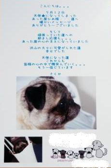 蓬ちゃん3